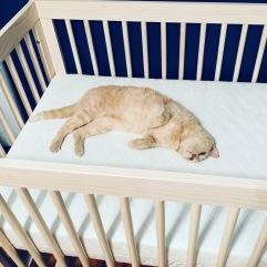 """cat in the """"cradle"""""""